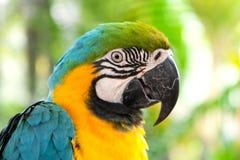 цветастый попыгай macaw стоковое фото