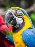 цветастый попыгай macaw стоковое фото rf