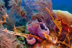 цветастый риф Стоковые Фотографии RF