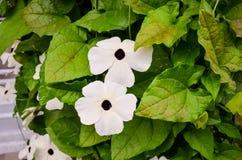 цветастый сад цветка Стоковое Изображение RF