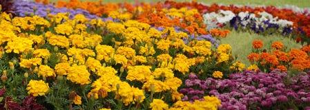 цветастый сад цветка Стоковые Фотографии RF