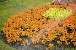 цветастый сад цветка Стоковые Фото