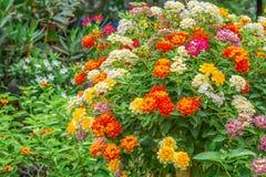 цветастый сад цветков Стоковые Изображения RF