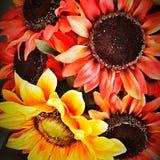 цветастый солнцецвет Стоковые Изображения