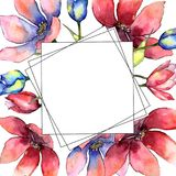 цветастый тюльпан Флористический ботанический цветок Квадрат орнамента границы рамки Стоковые Фотографии RF