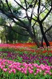 цветастый тюльпан цветка Стоковая Фотография RF