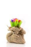 Цветастый тюльпан на flowerpod в мешке Стоковое Изображение