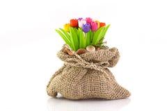 Цветастый тюльпан на flowerpod в мешке Стоковое Фото