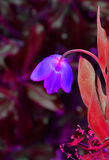 цветастый тюльпан Стоковые Изображения RF