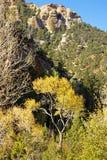 цветастый хлопок Стоковое Изображение RF