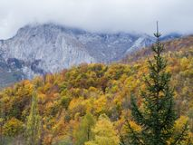 цветастый холм Стоковая Фотография RF