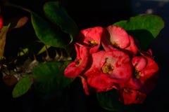 цветастый цветок Зацветите в саде на солнечном лете или весеннем дне Стоковая Фотография RF