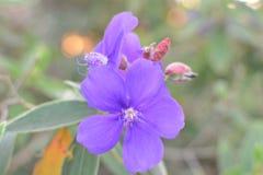 цветастый цветок Зацветите в саде на солнечном лете или весеннем дне Стоковые Изображения