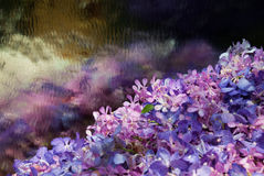 Цветастый цветок орхидеи Стоковое фото RF