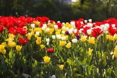 цветастый цветок поля Стоковые Изображения RF