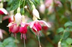 цветастый цветок Стоковое Изображение
