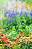 цветастый цветок стоковая фотография rf