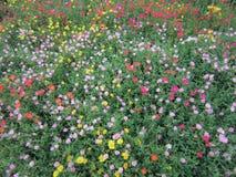 цветастый цветок Стоковая Фотография