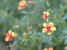 цветастый цветок Стоковое Изображение RF