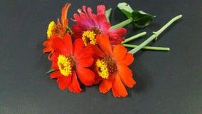 цветастый цветок Стоковые Изображения