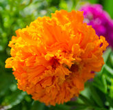цветастый цветок Стоковое фото RF
