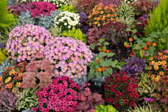 Цветастый flowerbed Стоковые Изображения RF