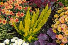 Цветастый flowerbed Стоковая Фотография RF