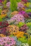 Цветастый flowerbed Стоковые Фотографии RF
