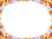 цветастый gerbera Стоковые Изображения RF