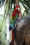цветастый macaw Стоковое фото RF
