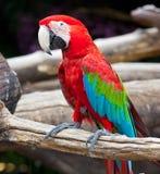 цветастый macaw стоковые фото