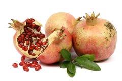 цветастый pomegranate Стоковое Фото