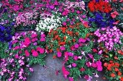 цветастый potting цветка стоковые изображения rf