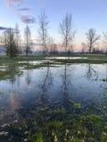 Цвета вечера весны Rezekne latvia Стоковое фото RF