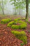 Цвета в сезоне осени стоковое фото