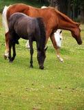 Цвета дерева лошадей Стоковые Фотографии RF
