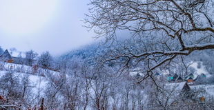 Цвета зимы Стоковые Фото