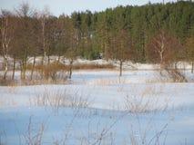 Цвета зимы Стоковое Изображение RF