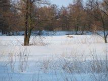 Цвета зимы Стоковые Изображения RF