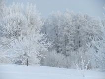 Цвета зимы Стоковая Фотография RF