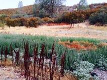 Цвета листвы Стоковые Фотографии RF