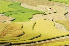 Цвета и кривые террас риса Стоковая Фотография