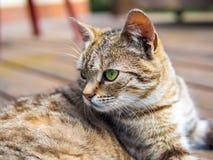 Цвета кота лежа и наблюдая brigh Стоковые Фотографии RF