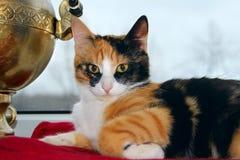 цвета 3 кот принося везение стоковое фото