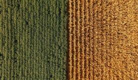 Цвета кукурузного поля Стоковые Изображения RF