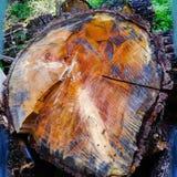 Цвета леса стоковое изображение