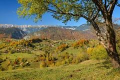 Цвета осени в горной области Стоковое Изображение