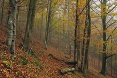 Цвета осени в лесе горы Стоковые Фотографии RF