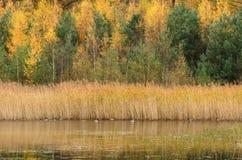 Цвета осени в лесе над водой Стоковое Изображение RF
