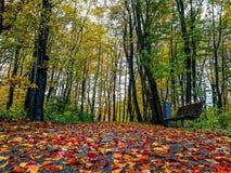 Цвета осени в лесе Стоковое Изображение RF